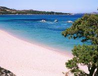 16_Falco_spiaggia_mannenaRGB
