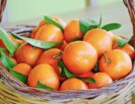 Sardinia clementini